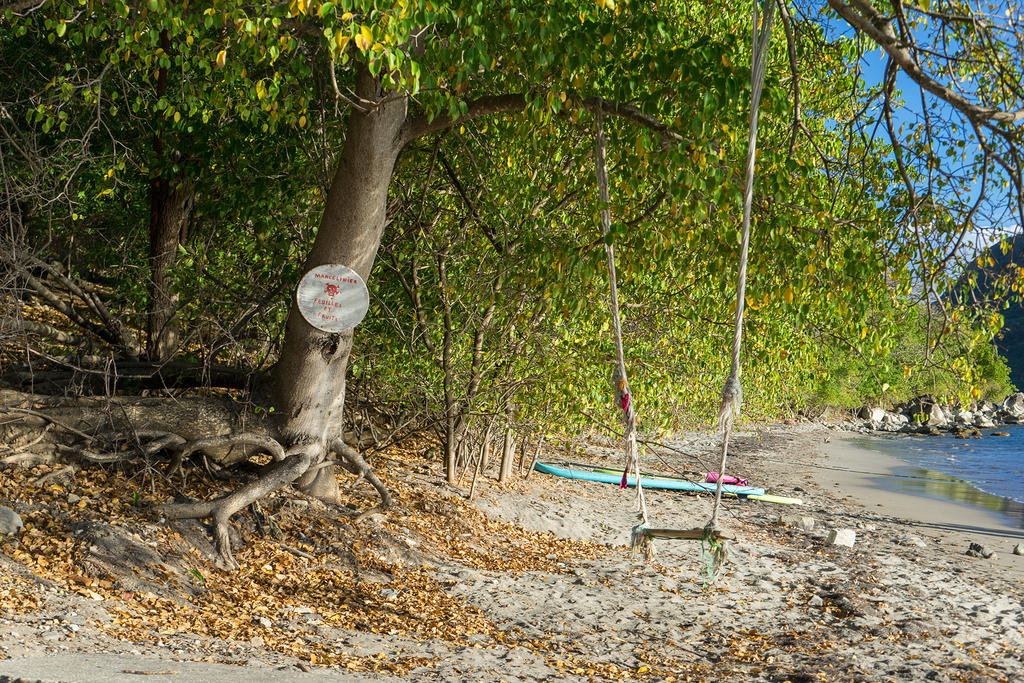 Swing under an  manchineel tree