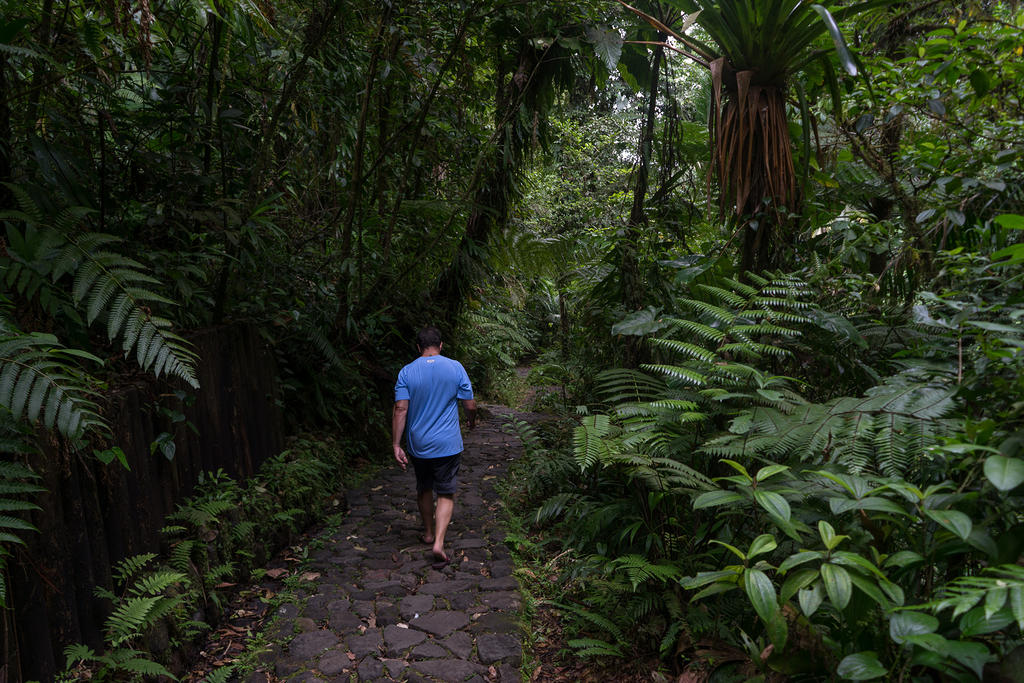 Mike walking the rain forest path