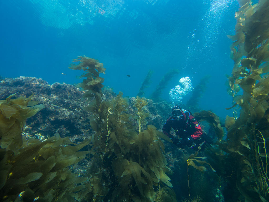 Diving Ithmus Reef