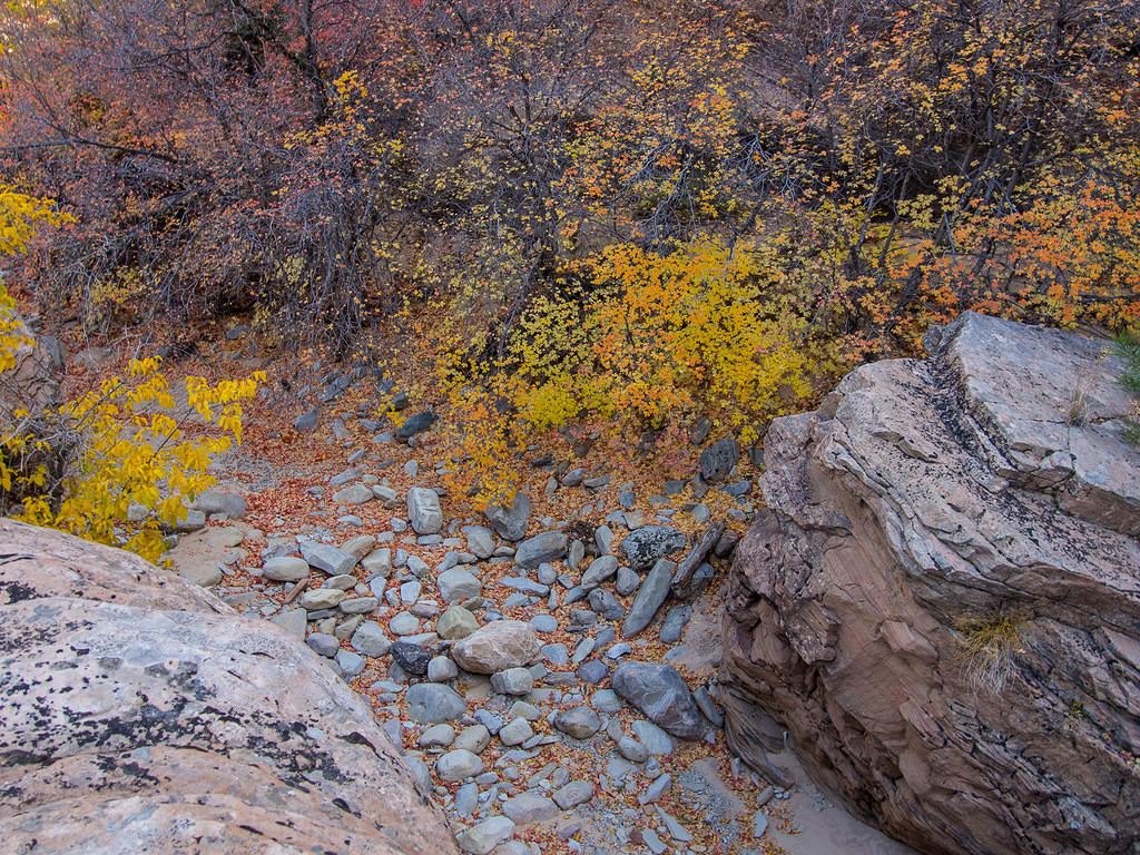 Fall colors and Zion rocks