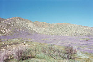 03.04.01 Anza Borrego and San Francisco