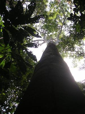Looking up through the jungle