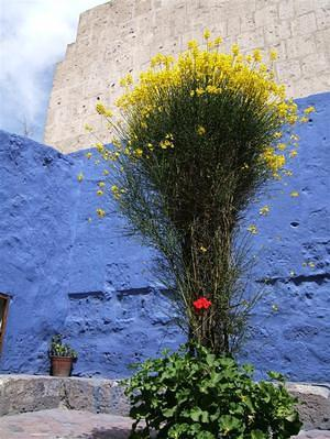 Yellow and blue; Convent of Santa Catalina