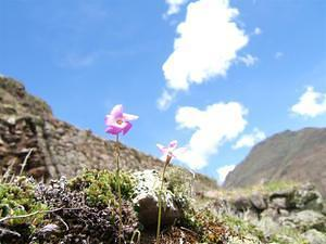 Purple flowers on Inka terrace walls