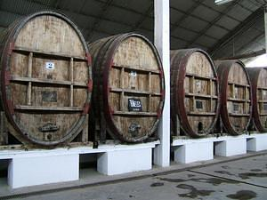 Old winery barrels