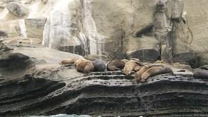 Seals lazing about