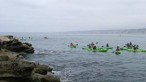 Kayakers hovering around the seals