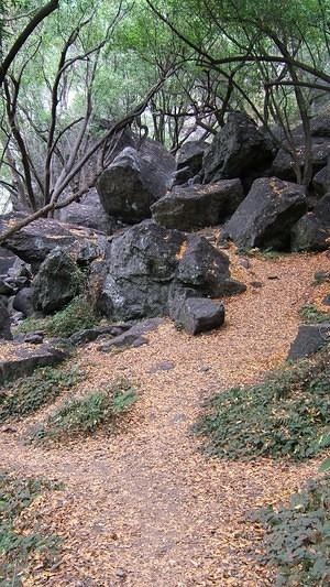 Brown leaves and black rocks