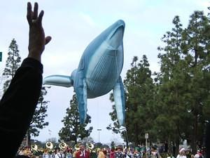 Yo whale, gimme five!