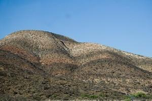 Hillside of elephant trees, Baja