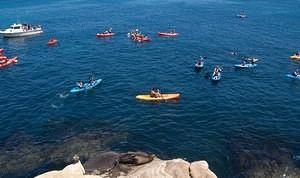 Lone sea lion and a sea of tour kayaks