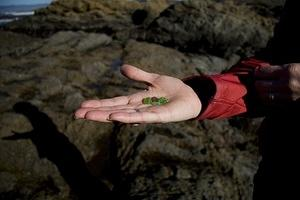 Anna holds beach glass at Fort Bragg