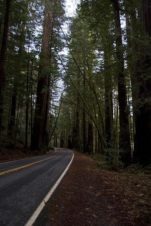 Avenue of the Giants road
