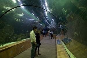 Another glass tunnel through L'Oceanografic