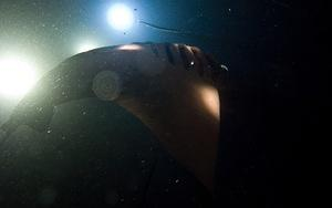 Manta ray looping in video lights