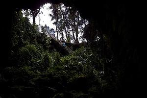 Looking out from Kaumana Cave lava tube