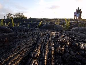 Ferns growing from the lava flow