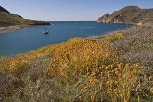 Wildflowers and the harbor