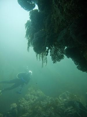 Lisa looking over the gorgonian wall