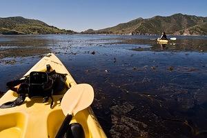 Kayaks in the kelp near Bird Rock