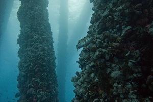 Kelp bass and rig columns