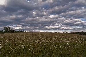 Clouds and daisies