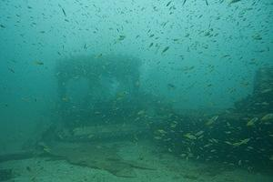 Lots of little yellow tails at the Sal Si Puedes wreck