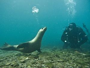 A sea lion blows bubbles with Adam