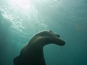 Sea lion in the sun
