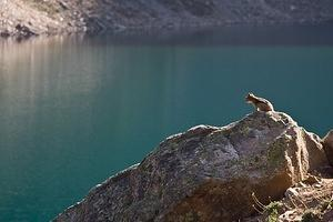 Chipmunk perched over Lake Agnes