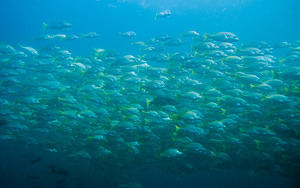 Large school of fish