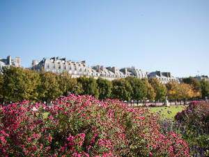 Flowers in Jardin des Tuileries