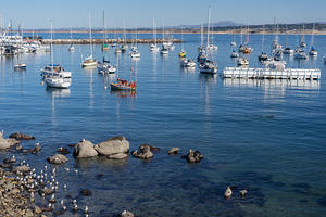Seals at Monterey Bay