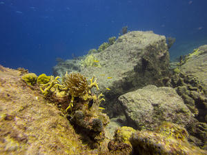 Corals and yellow fish