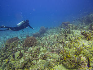 Pete diving over the corals and sponges