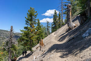 Mount Baden-Powell Overnight Hike