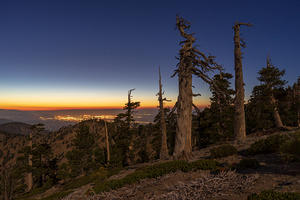 Limber pines on Mt Baden-Powell summit