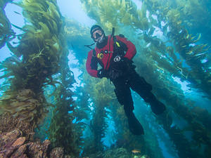 Pete diving in the kelp