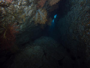 Dark cave and sea fans