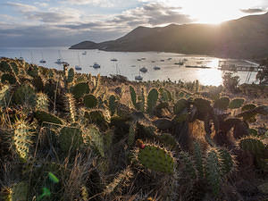 two harbors and cactus