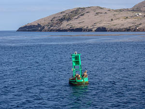 Sea lions sunning on a marker buoy