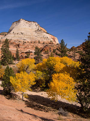 Fall yellow colors - Zion river bed