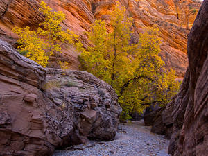 Dry creekbed fall colors