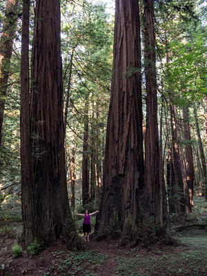 Anna and some giant redwood trees
