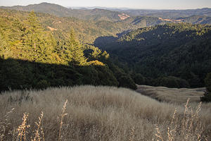Rolling hills of Humboldt County