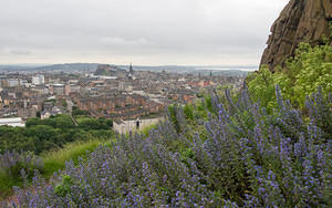 Blue flowers and Edinburgh